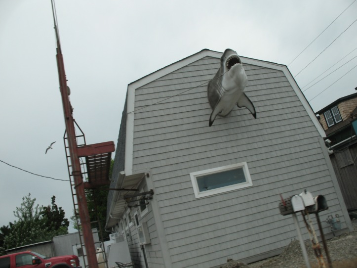House w shark on side